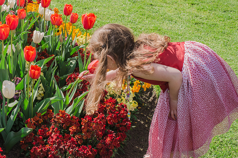 Young girl in dress smelling the tulips at Royal Tasmanian Botanical Gardens.